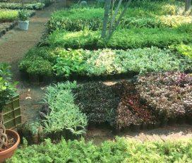 Bee Maa Season Garden