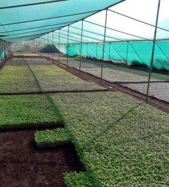 Sadguru Farm & Nursery