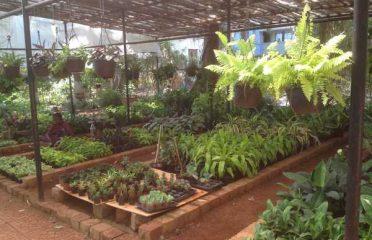 Bhavans Plant Nursery