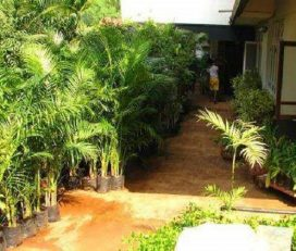 Lila Nursery