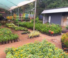 Mambra Nursery