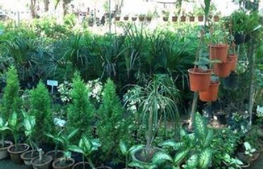 Ludhiana Nursery