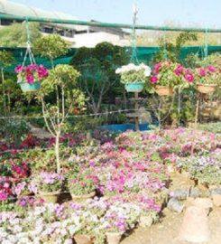Bhawna Nursery
