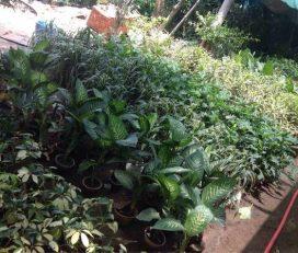 Sahil Nursery