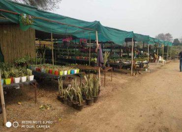 Osho Farm and Nursery