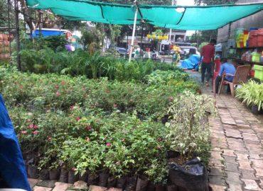 Alka Farm & Billimora Nursery