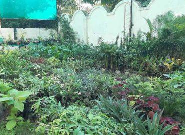 Smita Nursery