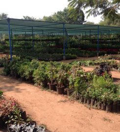 Madhuvan Nursery