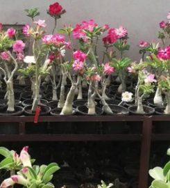 Raj Garden Plants