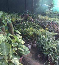 Pooja Nursery