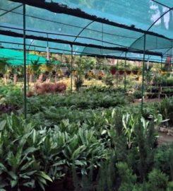 Savera Nursery
