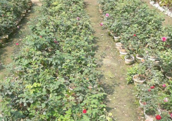 Plaza Nursery And Landscape India Gardening Directory