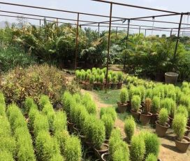 Shree Vinayak Nursery