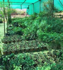 Rudraksh Nursery