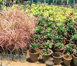 Dayanand Arjun Nursery
