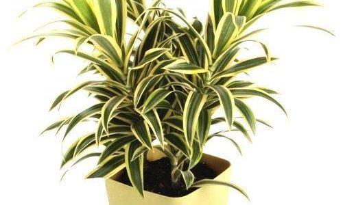 Best plant nursery with low price