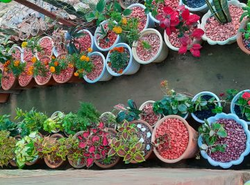 Lovely place with variety of plant ,planters pebbles and manures