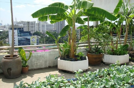 Best Trees For Terrace Garden In India India Gardening