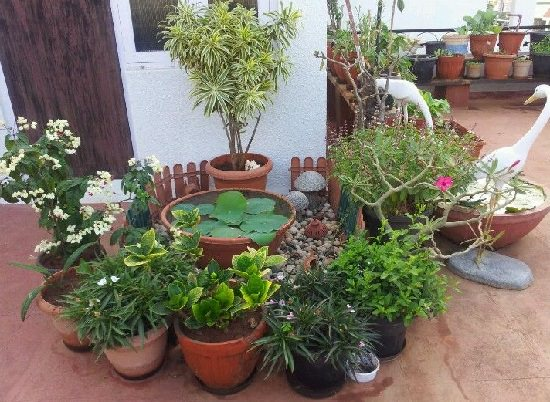 How To Build A Terrace Garden In India India Gardening