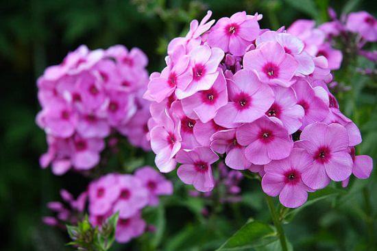 24 Best Winter Flowering Plants In India India Gardening