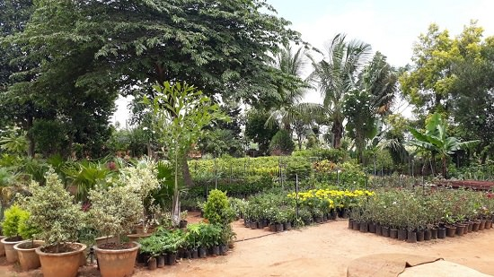 15 Best Plant Nurseries In Bangalore