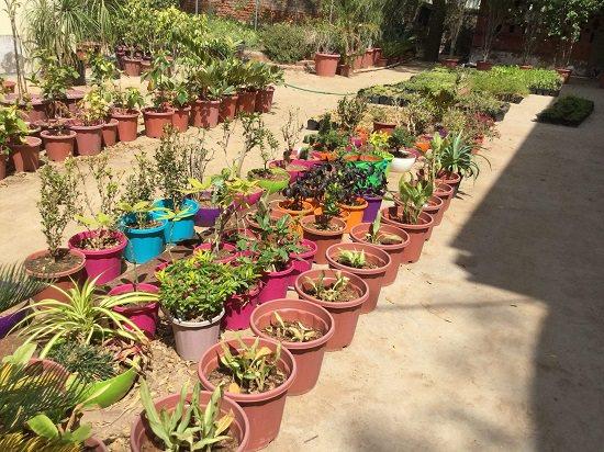 8 Best Plant Nurseries In Ahmedabad India Gardening