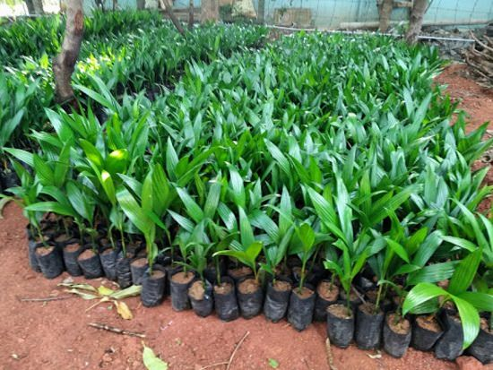 Best Plant Nurseries In Coimbatore India Gardening
