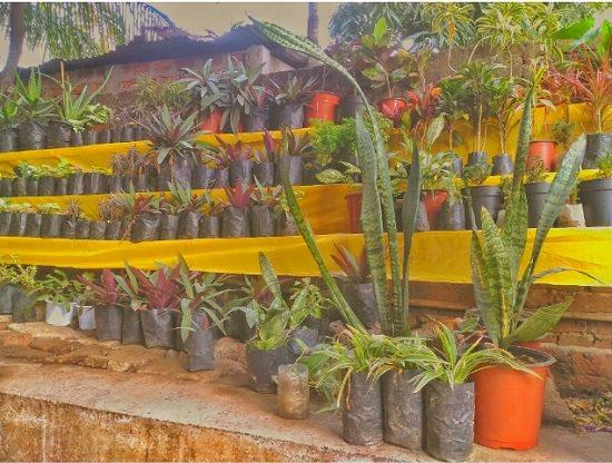 8 Best Plant Nurseries In Guwahati