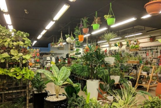 10 Best Plant Nurseries In Kochi