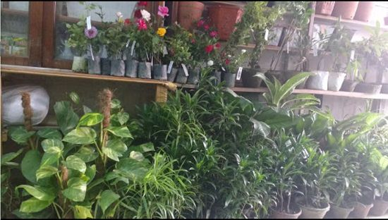 Plant Nurseries In Kolkata India