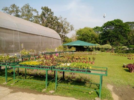Best Plant Nursery In Jamshedpur India Gardening