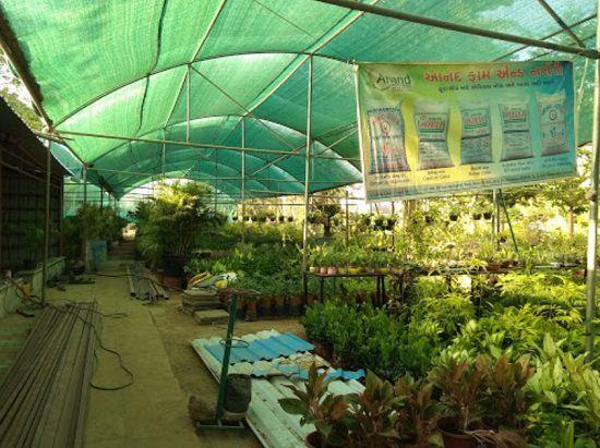 8 Best Plant Nursery In Gandhinagar