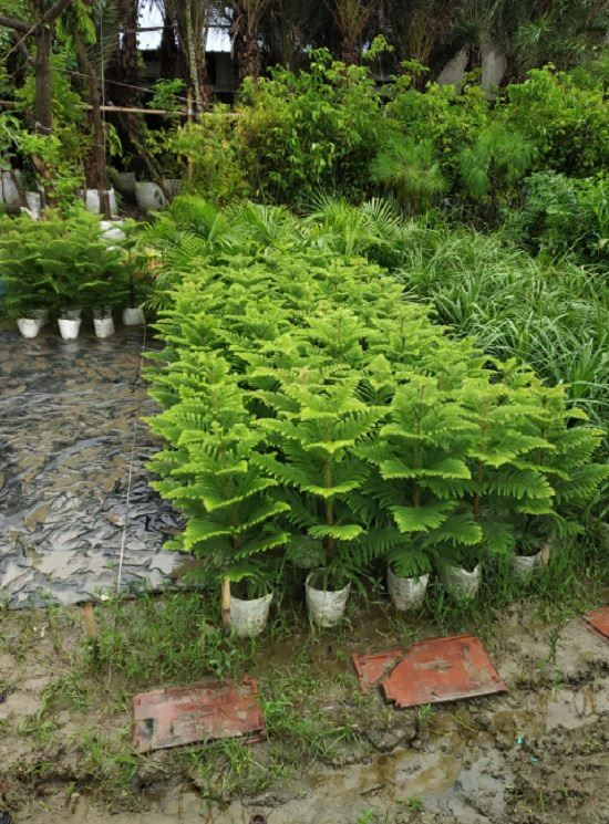 3 Best Plant Nursery In Agartala India Gardening