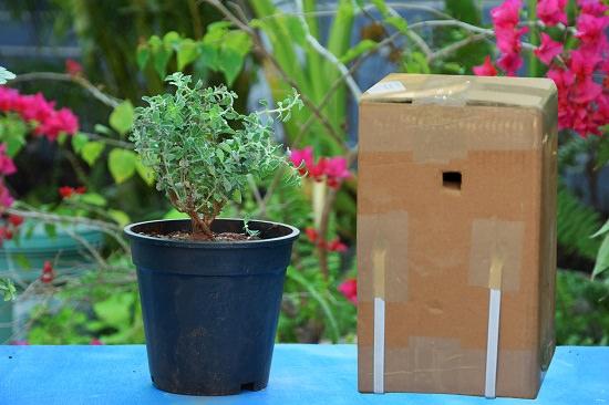 Best Online Plant Nursery In Bhopal