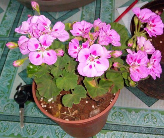 5 Best Plant Nursery In Ajmer India Gardening