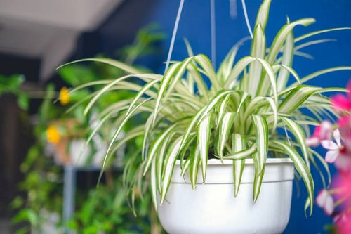 12 Best Indoor Plants For Indian Climate India Gardening