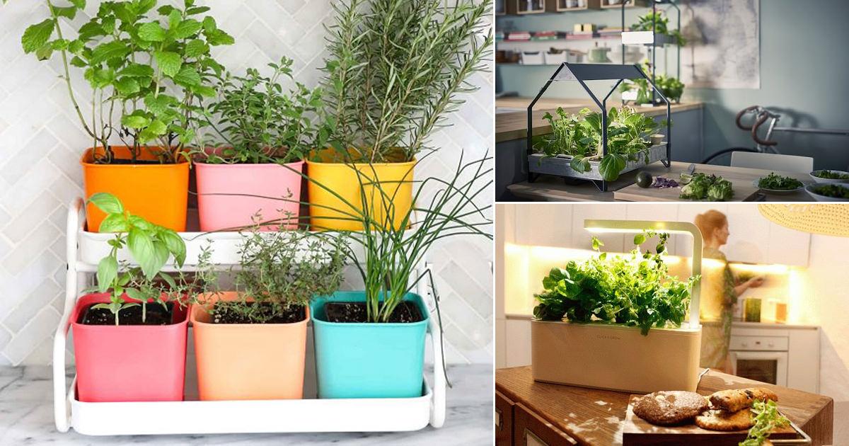 Importance of Kitchen Garden in India • India Gardening