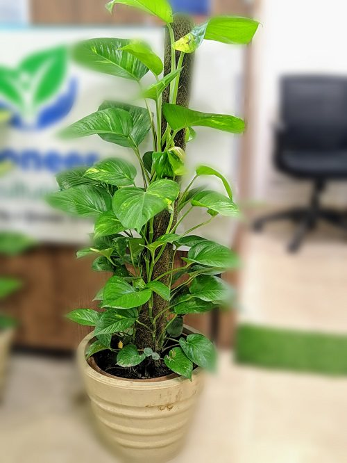10 Money Attracting Plants in India | Indian Plants that ...
